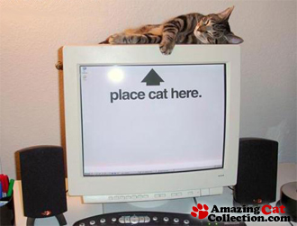catpoweredpc.jpg