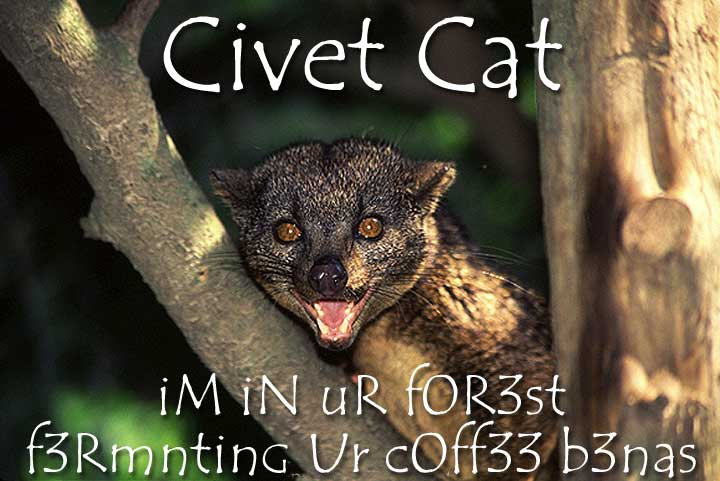 civetcat.jpg