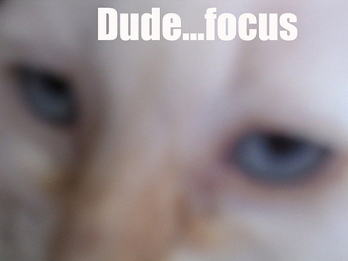focus.jpg