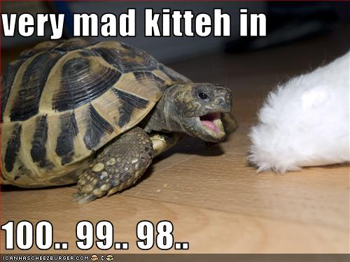 funny-pictures-cat-is-about-to-be-mad-at-turtle.jpg