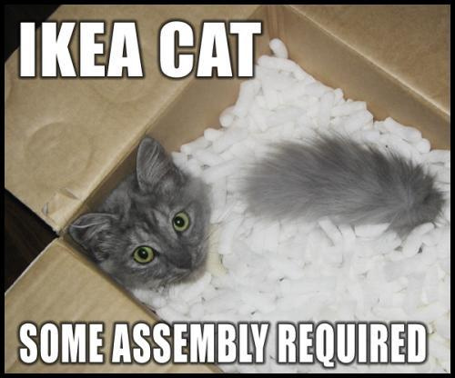 ikeacat.jpg
