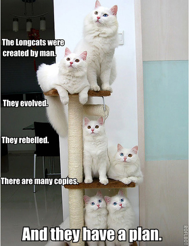 longcats.jpg