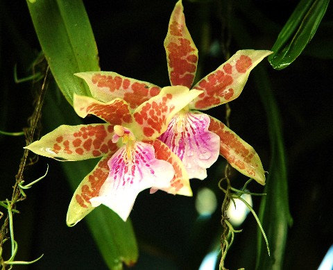 orchid1.jpg