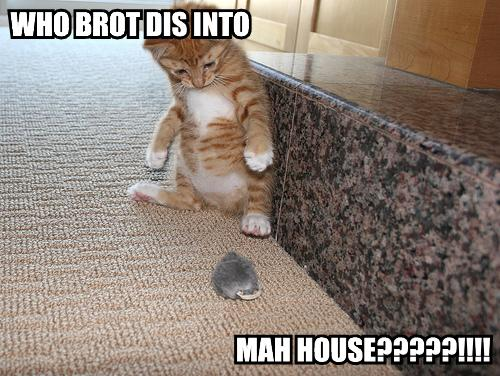 who-brot-dis-into-mah-house.jpg